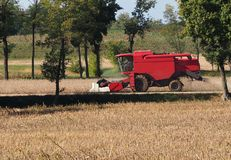 Red combine harvester on a soybean field in the first days of autumn.  stock photo