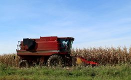 Red combine harvester start to work in the cornfield in a sunny autumn day.  royalty free stock photography