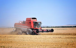Red combine harvesting. Red combine machine harvesting a golden wheat field - copy space Royalty Free Stock Photo