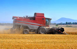 Red combine harvesting. Red combine machine harvesting a golden wheat field - copy space Stock Images