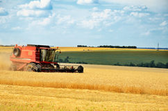 Red combine harvests wheat in a field Royalty Free Stock Image