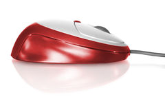 Red computer mouse. Isolated on white with reflection royalty free stock images