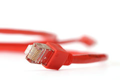 Red computer network cable. On white background Royalty Free Stock Photos