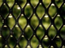 Rejilla con Waterdrops Imagenes de archivo