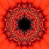 Red Concentric Flower Center Mandala Kaleidoscopic design Stock Images