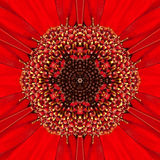 Red Concentric Flower Center. Mandala Kaleidoscopic design Royalty Free Stock Photo