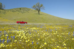 Red convertible driving past spring flowers royalty free stock images