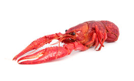 Red cooked crayfish Stock Images