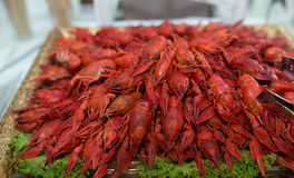 Red cooked  crayfish Royalty Free Stock Image