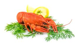 Red cooked lobster with dill and lemon. Isolated on white background Royalty Free Stock Photo