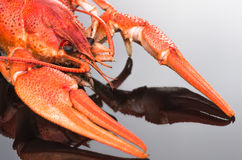 Red cooked lobster Royalty Free Stock Photography