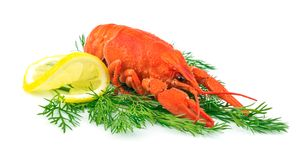 Red cooked lobster. With lemon on dill  on white background Royalty Free Stock Photos
