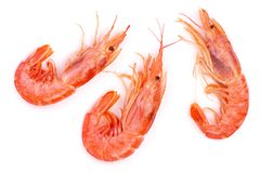 Red cooked prawn or shrimp isolated on white background. Top view Stock Photography