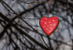 Red cookie heart shaped on the tree. Red cookie heart shaped tied with thread to the branch of a tree Royalty Free Stock Images