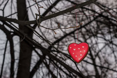 Red cookie heart shaped on the tree. Red cookie heart shaped tied with thread to the branch of a tree Royalty Free Stock Photo