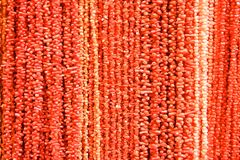 Red coral Royalty Free Stock Images