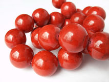 Red coral beads Royalty Free Stock Images
