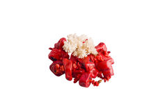 Red coral beads and coral Stock Images