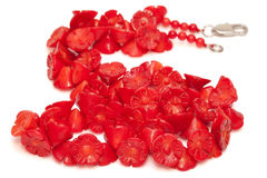 Red Coral Beads isolated Royalty Free Stock Images