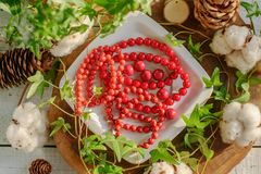 Red coral beads Royalty Free Stock Image