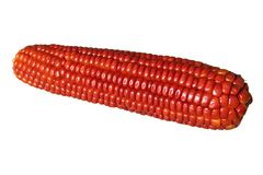 Red corn. Isolated red corn on white background Royalty Free Stock Photos
