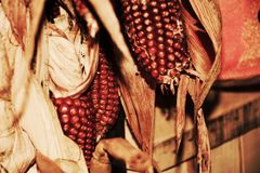 Red corn background Stock Photography