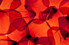 Red Corn Poppy Leaves. Pattern of red corn poppy leaves with backlight royalty free stock images