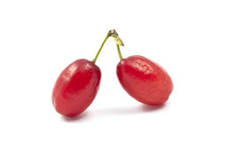 Red cornel Royalty Free Stock Photo