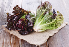 Red cos lettuce on rustic wooden background. Red cos lettuce on burlap cloth on a rustic wooden background royalty free stock photo