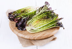 Red cos lettuce on white wooden background. Half of red cos lettuce on a chopping board on white wooden background stock images