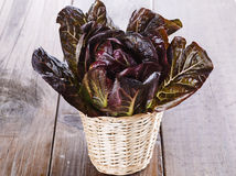 Red cos lettuce on wooden background. Red cos lettuce on a woven basket over wooden background stock photo
