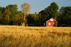 Red cottage. At oat field Stock Photography