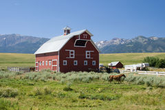 Red country barn with horses. A pretty view of a red gambrel-style barn on a country horse farm with mountains in the background royalty free stock photos