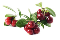 Red cowberry Royalty Free Stock Photography