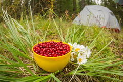 Red cowberry in a mug on the grass with white flowers field daisies, flat lay.  Stock Photos