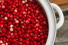 Red cowberry in a pan Stock Images