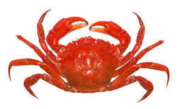 Red crab. Isolated on white background Royalty Free Stock Photos