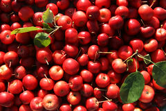 Red Crab Apples Royalty Free Stock Photos