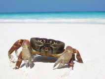 Red crab on beach Royalty Free Stock Images