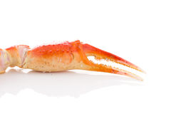 Red crab claws isolated Royalty Free Stock Image