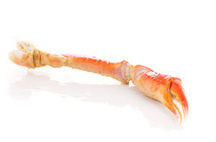 Red crab claws isolated Stock Photography