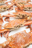Red crab. Close-up isolated on white background royalty free stock images