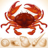 Red crab and few seashell Stock Photo