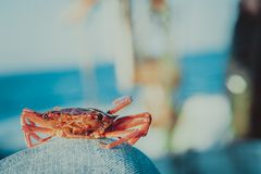 Red crab on fishing boat on blue background Stock Images