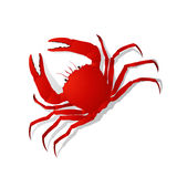 Red crab. Isolated objects on white background Royalty Free Stock Photography