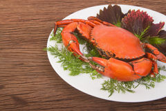 Red crab on a plate Stock Images