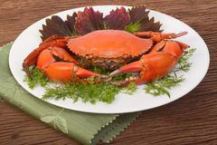 Red crab on a plate Stock Image