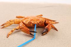 Red crab on sand and tubule for a cocktail. Isolated on a sand background Stock Photos