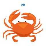 Red crab vector illustration. Isolated on white background. Marine animal Royalty Free Stock Photography