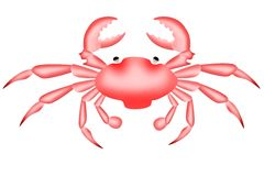 Red crab on a white. Illustration of red crab on white background royalty free illustration